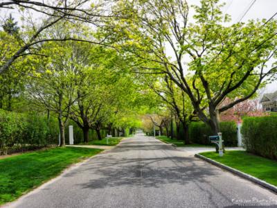 viaggio fotografico- Hampton NY